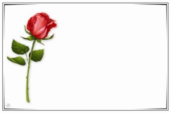Single Red Rose With Border Pack Of 50 Enclosure Cards