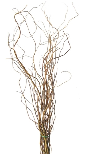 Curly Willow Branches 5 6 Feet Tall 10 Bunches