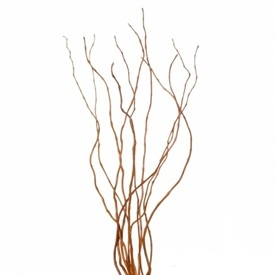 Curly Willow Branches 3 4 Feet Tall 10 Bunches