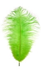 "17-21"" Ostrich Feathers - Dyed Lime Green (1/2 Pound)"