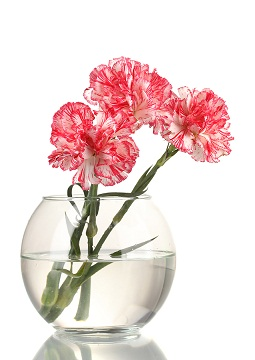 Carnations in bubble bowl