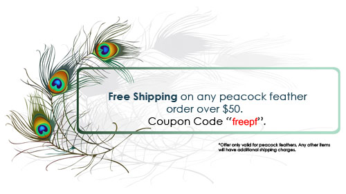 Free shipping on peacock feathers
